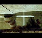 前からトイレ盗撮 白色厚底靴女性の放尿シーン
