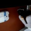 洋式トイレ盗撮 空爆アングル ホワイトサングラスを掛けた女の子のトイレシーン