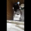 洋式トイレ盗撮 空爆アングル LINEに夢中な女の子のおしっこタイム