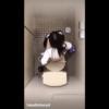 【洋式トイレ盗撮】JKが友達と会話しながらうんこタイム