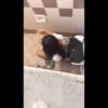【洋式トイレ盗撮】脚を広げて検尿中の女の子